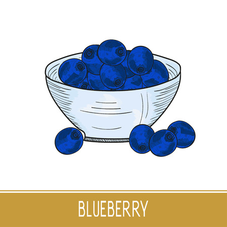 Blueberries. Berries, bowl. Color drawing. Sketch. Illustration