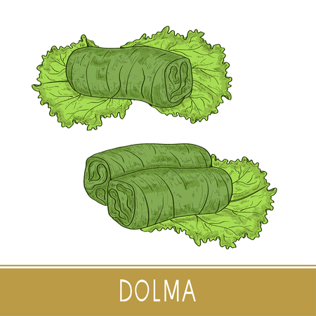 Dolma. Food. Leaf, salad. Sketch. Color