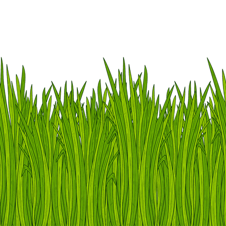 Vetiver. Plant. Leaves, root. Background, wallpaper, seamless. Sketch. Color. Figure horizontally.