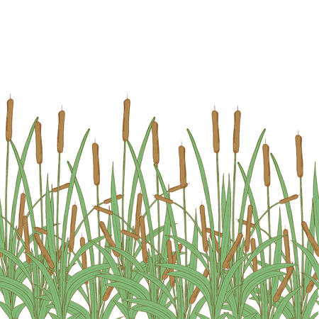 Sedge, reed, cane, bulrush. Texture, background, wallpaper, seamless. Template. Color. Illustration