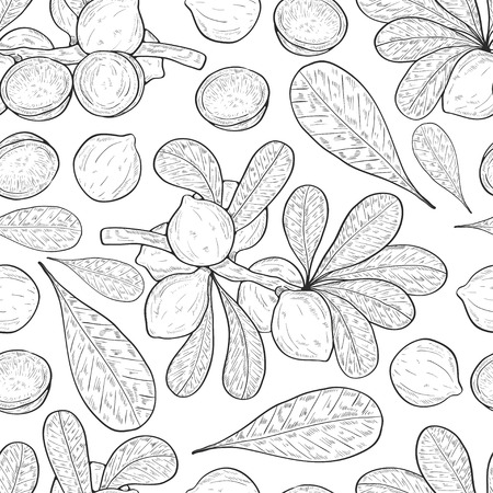 Macadamia. Plant. Fruit, leaves, branch. Background, texture, wallpaper, seamless. Sketch. Illustration
