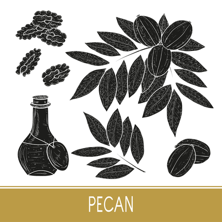 Pecan. Plant. Nut. Fruit, leaves, branch. Bottle with oil. Set. Black silhouette on white background.