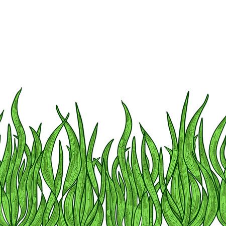 Spirulina. Algae. Sketch. Background, wallpaper, seamless, texture.Color