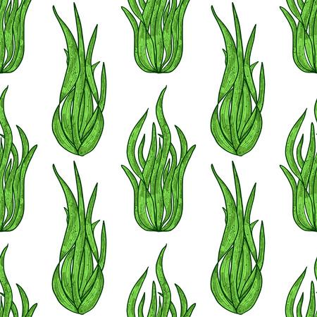 Spirulina. Algae. Background, wallpaper, seamless, texture. Color