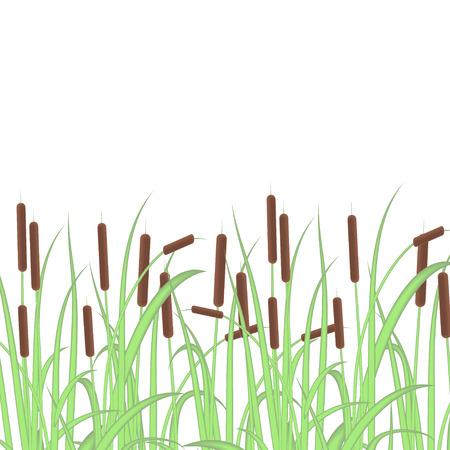 Sedge, reed, cane, bulrush. Color. Texture, background. Illustration