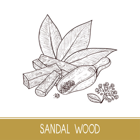 Sandal wood. Leaf, flower. Powder, bacillus, spoon. Monochrome. Sketch. On a white background. Иллюстрация