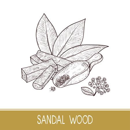 Sandal wood. Leaf, flower. Powder, bacillus, spoon. Monochrome. Sketch. On a white background. Illustration