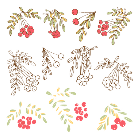 Rowan. Berries, branches. Set. drawing. On a white background 向量圖像
