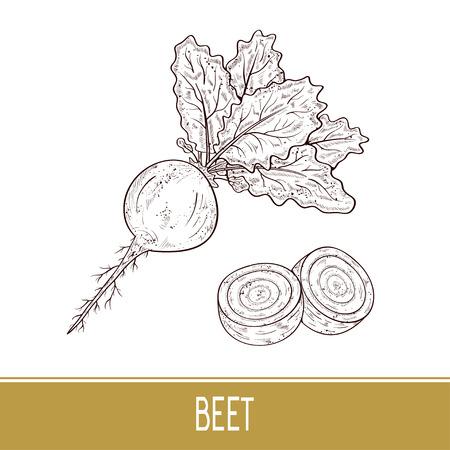 Beet. Vegetable. Fruit, leaves. Sketch. Set.