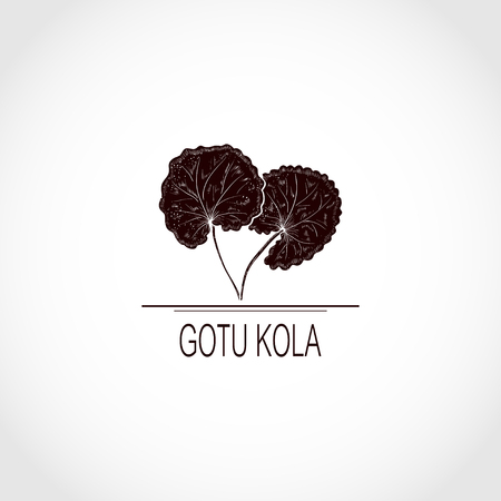 Gotu kola. leaf.