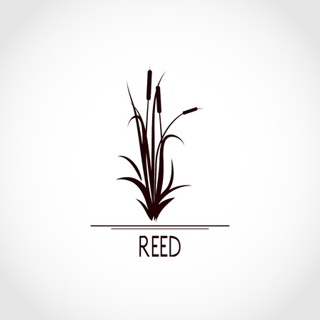 Sedge, reed, cane, bulrush. Set. Black silhouette on white background.