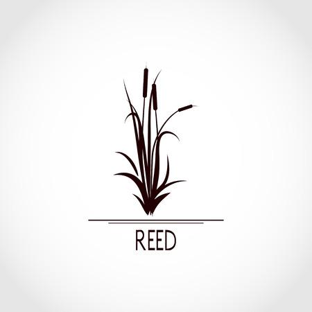 Sedge, reed, cane, bulrush. Set. Black silhouette on white background. 版權商用圖片 - 112505924