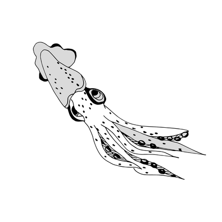 squid. Black image on a white background. Sketch. Doodle.