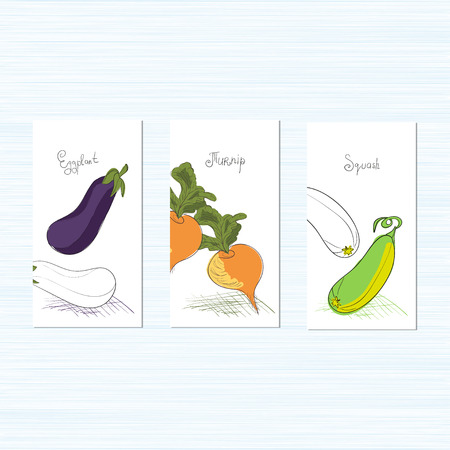 Template. Vegetables. It can be used for packing of seeds.Zucchini, eggplant, turnips. Sketch. Set. Illustration