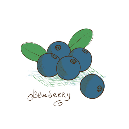 Blueberry. Drawing on a white background. Sketch. Doodle.