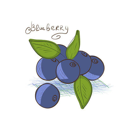 Blueberry. Drawing on a white background. Sketch.