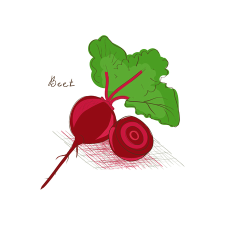 Beet. Vegetable. Sketch, Doodle. On a white background. Illusztráció