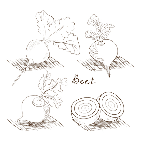 Beet. Black-and-white drawing on a white background. Vegetable. Set. Sketch, doodle.
