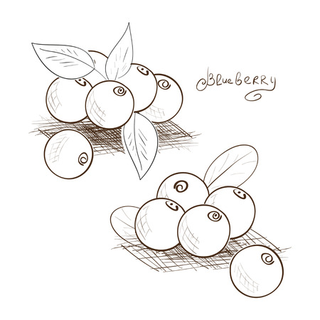 Blueberries. Sketch. Black-and-white image on a white background. Set.