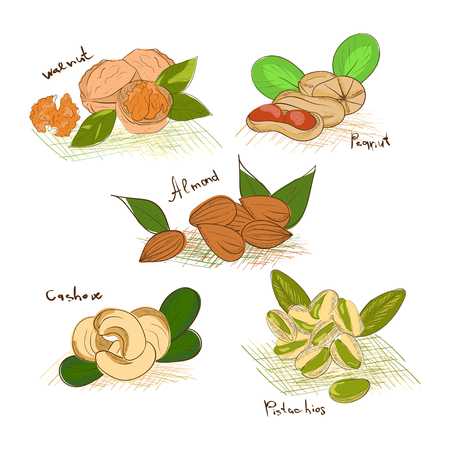 Nuts. Set. Sketch. Almonds, pistachios, walnuts, peanuts