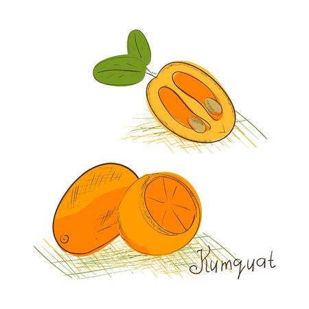 Kumquat. Esquisser. Régler. Fruits sur fond blanc. Vecteurs