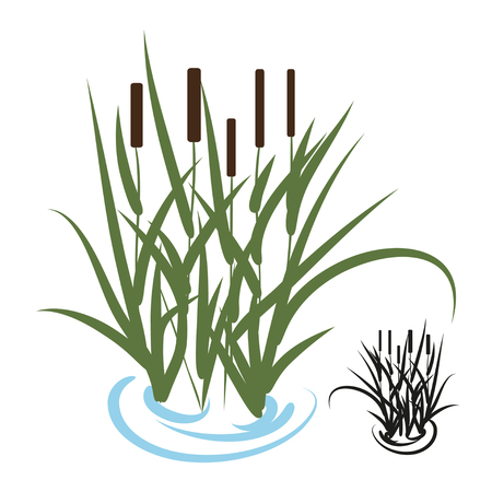Sedge, bulrush. Color image, a silhouette on a white background.
