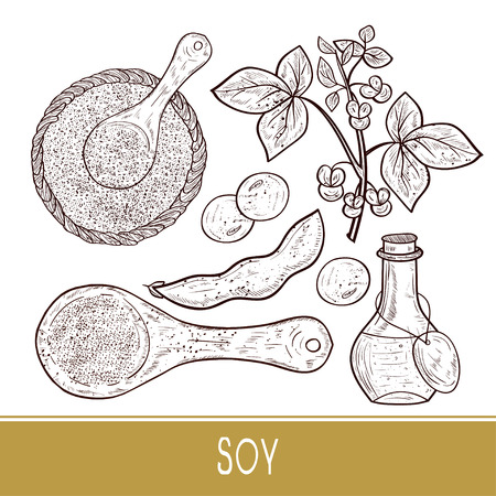 Soy. Plant Stem, leaves, flowers, fruit. Bottle, scoop, powder, sauce. Set. Monophonic. Sketch.