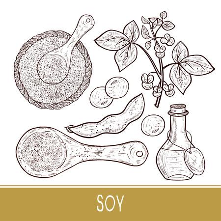 Soy. Plant Stem, leaves, flowers, fruit. Bottle, scoop, powder, sauce. Set. Monophonic. Sketch. Illustration