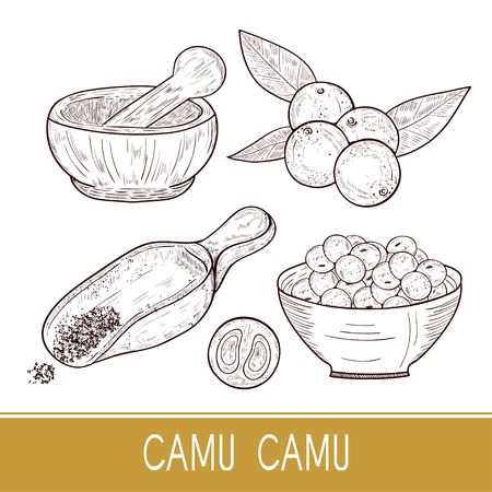 Camu camu. Branch, leaves, berry, spoon, mortar, bowl. Sketch. Set. Monophonic. Vectores