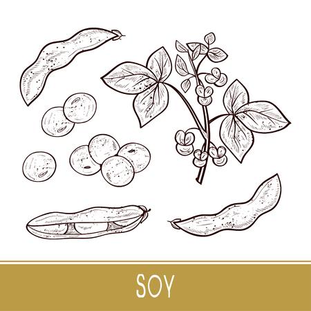 Soy. Plant. Stem, leaves, flowers, fruit. Sketch. Monophonic. Set Illustration