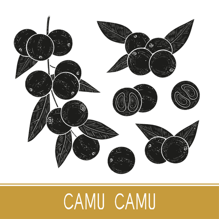 Camu camu. Branch, leaves, fruit, berry. Black silhouette on white background. Set. Monophonic.