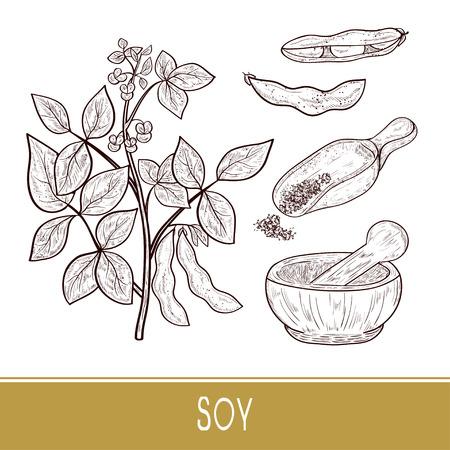 Soy. Plant Stem, leaves, flowers, fruit. Mortar, scoop, powder. Set. Monophonic. Sketch. Illustration