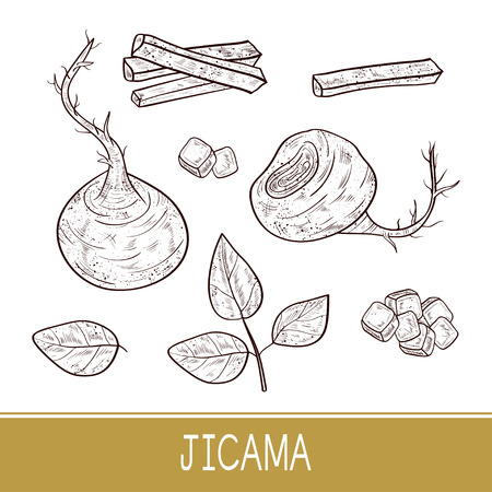 Jicama. Vegetable. Root, sheet, piece, cube. Sketch. Monophonic.