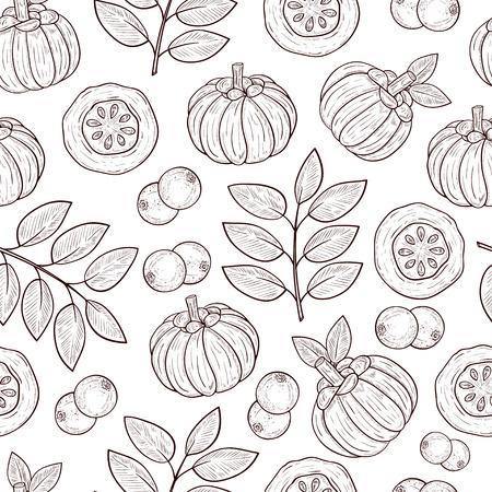 Garcinia. Leaves, fruit. Sketch. Background, wallpaper, seamless, texture. Illustration