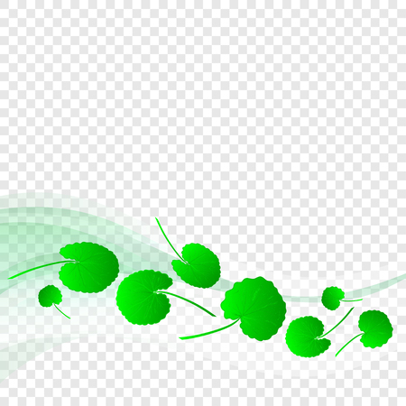 Gotu kola. Plant. Leaves, line, wave on a transparent background. Texture, postcard. Template. Abstract
