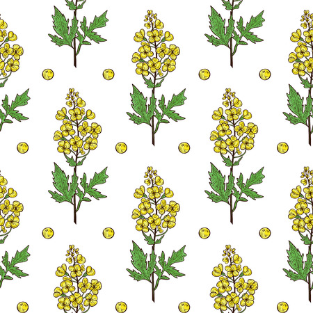 Mustard. Plant. Flower, leaf, stem, seed. Background, wallpaper, texture, seamless. Sketch.
