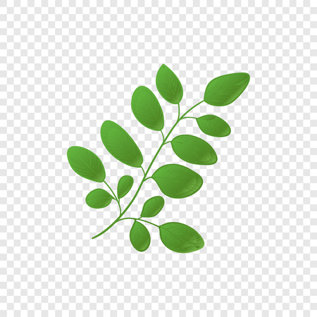Moringa. Plant. Logo, emblem, symbol. On a transparent background.
