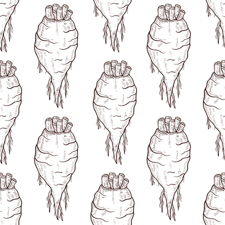 Sugar beet. Root. Sketch. background, wallpaper, texture, seamless.