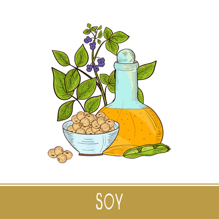 Soy. Plant and oil, pod, grain. Branch, bottle, bowl. Sketch. Color.