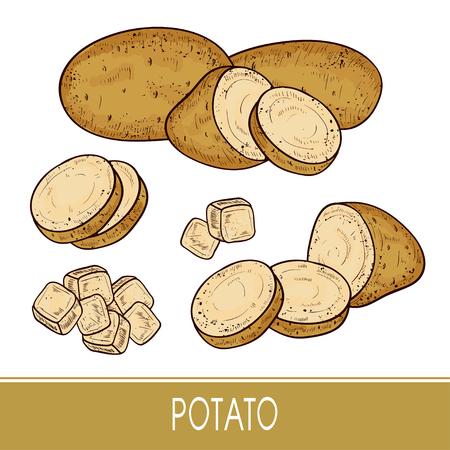 Potatoes. Tuber. Set. Sketch. Ilustração