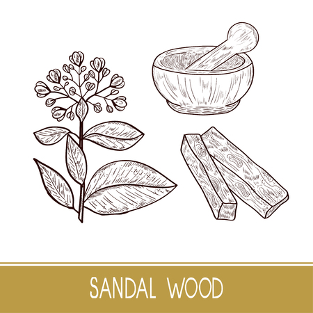 Sandal wood. Plant. Leaf, flower. Powder, mortar. Monochrome. Sketch. Set