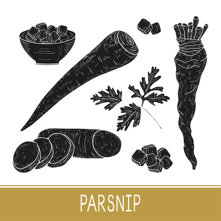 Parsnip. Vegetable. Root, sheet, piece. Set. Sketch. Black silhouette. On a white background. Illustration