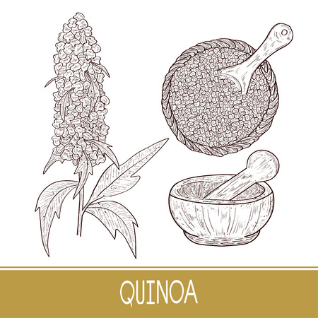Quinoa. Plant. Spoon, mortar. Bowl with seeds. Sketch. Set.