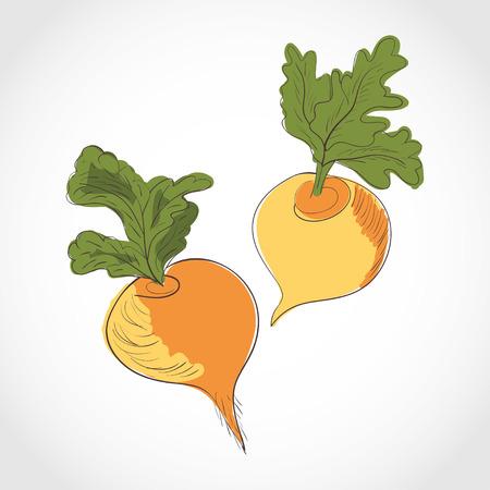 Turnip. Set. Sketch