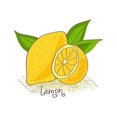 Limone. Frutta. Scarabocchio di schizzo. Su uno sfondo bianco. Vettoriali