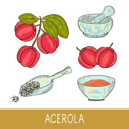 Acerola Sketch. Vecteurs