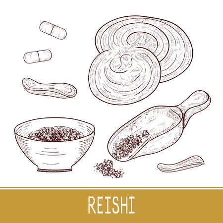 Reishi. Mushroom, powder. Set. Sketch. Monophonic. Illustration