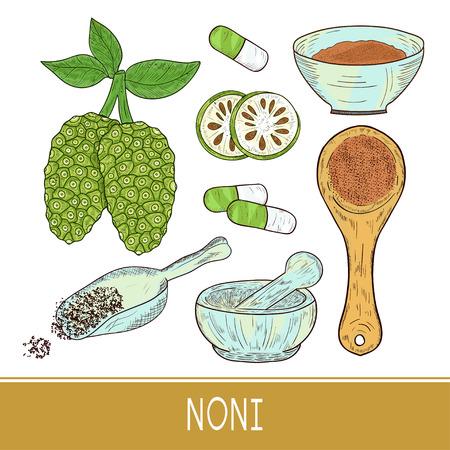 Noni. Fruit,  leaves, powder, spoon, mortar, bowl, pill. Sketch. Set. Color Illustration