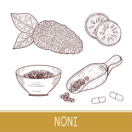 Noni. Fruit, leaves, powder, spoon, bowl, pill. Sketch. Set. Monophonic. 向量圖像