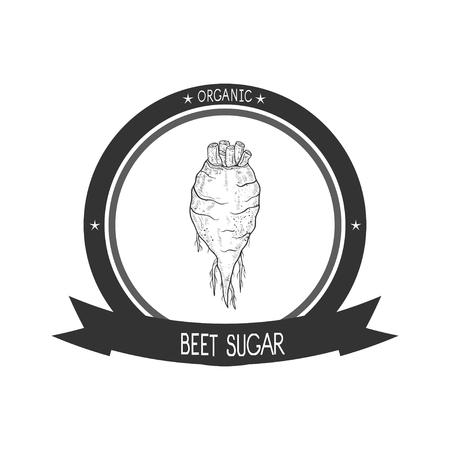 Sugar beet Sketch.